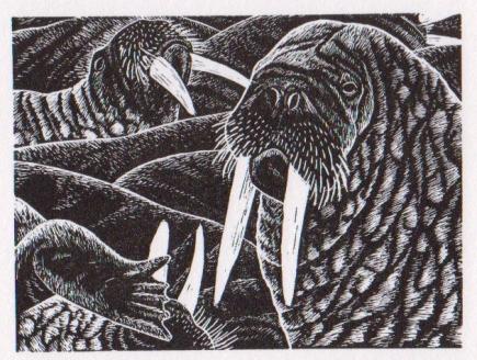 Walrus - wood engraving