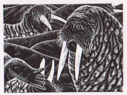 Walrus - wood engraving